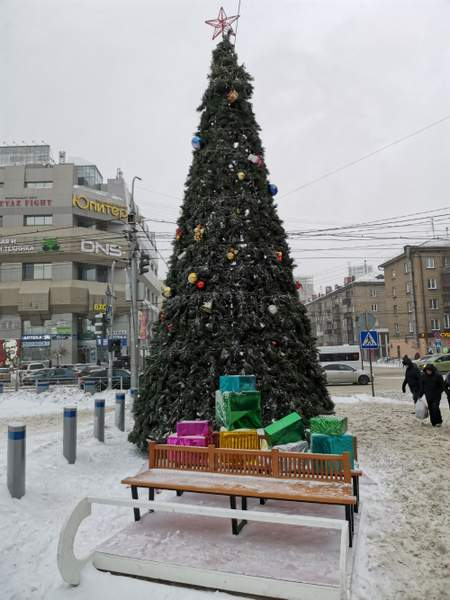 City tree - Novosibirsk